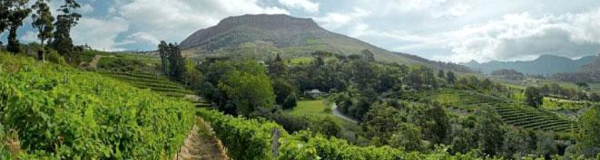 Eagles Nest Constantia Wine Farm   Constantia Valley